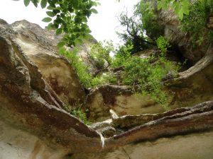 Вкаменената гора